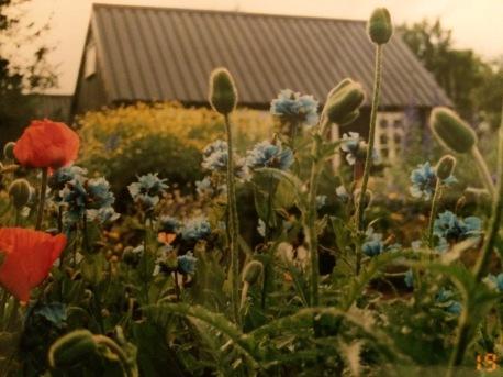Icelandic Garden.jpg